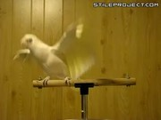 Frostie Dancing To Shake Your Tail Feather!