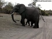 baby elephant sneezes and scares itself