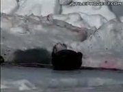 Baby Seals Clubbed To Death For Their Skin