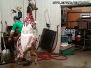 Skinning A Deer In 1 Minute