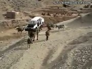 Camel Carries A Car - Only in Iraq!
