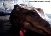 chopped off crocodile head is still alive! WTF!