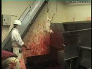 Animals having their throats slit and bleeding to death