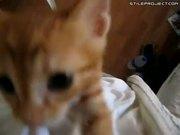 Very Hungry Kitten