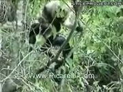 Baby Monkey Vs. Snake