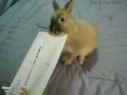 Bunny Letter Opener