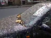 One shitty car - Totally covered in bird shit!
