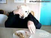 dog eating dinner