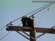 Bear Climbs Up Pole, Gets Shocked & Falls Down