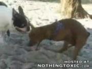Horny Dog jerks himself off