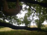 383 redbube nackter Mann klettert oeffentlich draussen im Wald auf Baum