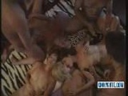 Big Swinger Orgy With Huge Loads Of Cum