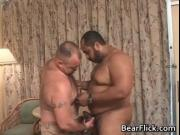 Gay bears giving the big love for a hard cock and fat a