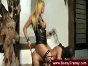 Kinky tranny dominatrix gets a blowjob