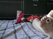 Hanging out on her laptop and stretching out toes