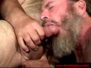 Hairy mature bear sucking cock